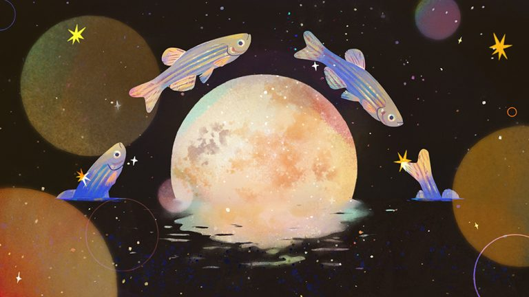 illustration of fish jumping over the moon